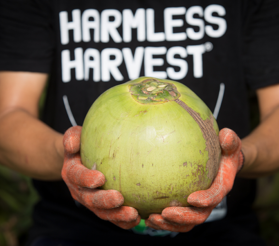 Close up of the torso of a man in Harmless Havest t-shirt holding a Nam Hom coconut in his two outstretched hands