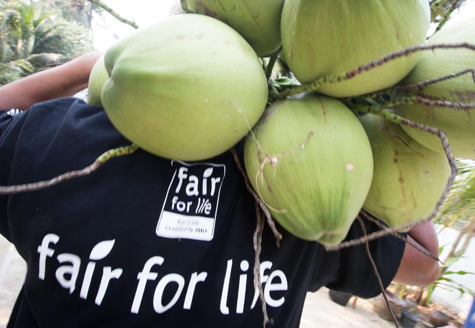 coconut_image